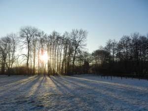 beaute-de-hiver