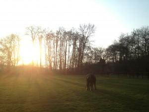 Soleil levant et un cheval dans une prairie