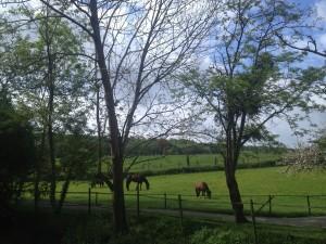 les-chevaux
