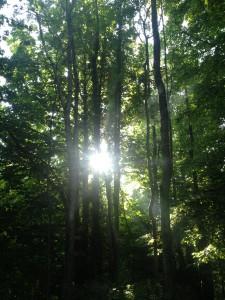 rayon de soleil dans les arbres