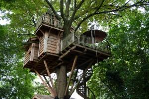 un-nid-d-oiseau-dans-les-arbres