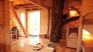 Un chene dans une cabane en bois